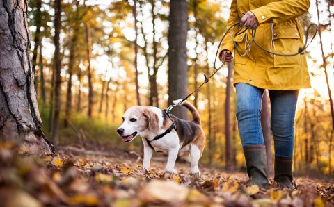 6 Pet Care Tips That Keep Them Healthy And Active